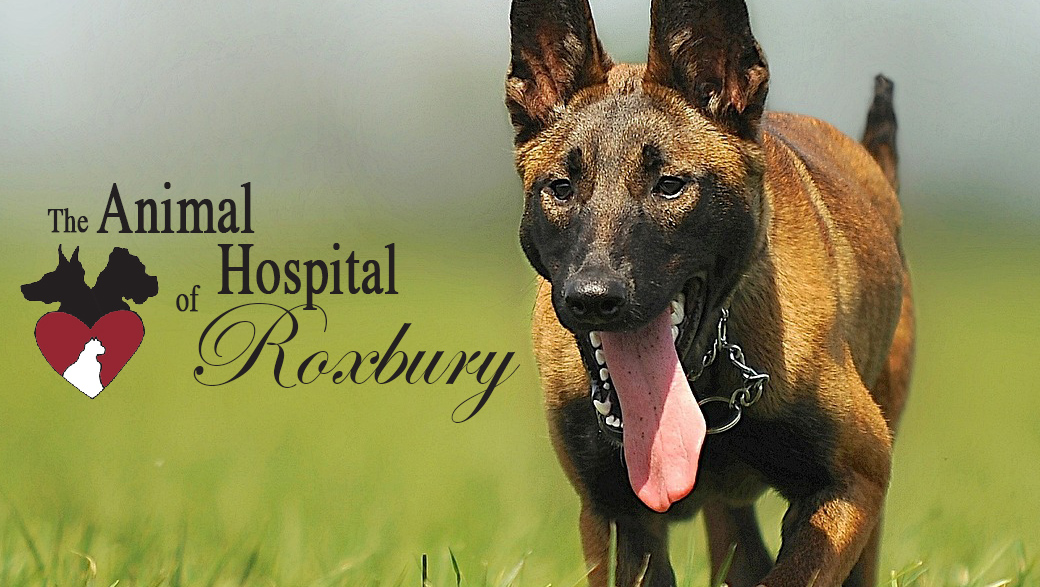 Animal Hospital of Roxbury